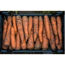Морковь домашняя 1 кг.