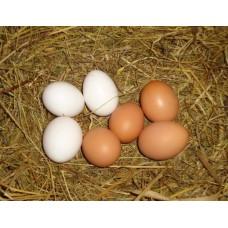 Яйцо куриное домашнее от свободных и счастливых кур 10 шт.
