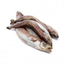Рыба Путассу свежезамороженная